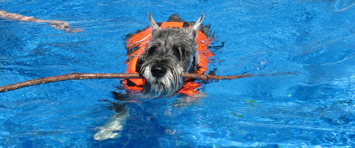 x-slide position 3 – Page ID 1248 – swimming schnauzer