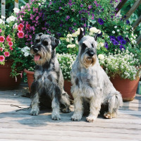 Our Dogs